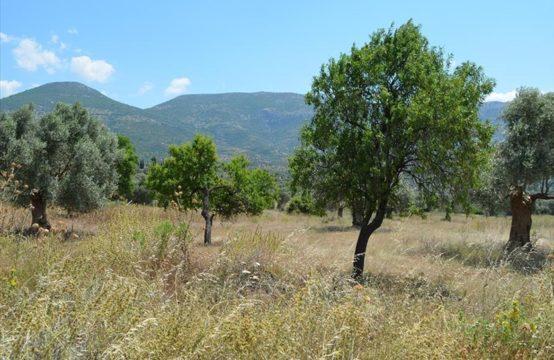 Продажа – Земельный участок 22000 кв.м , Эвия, Центральная Греция