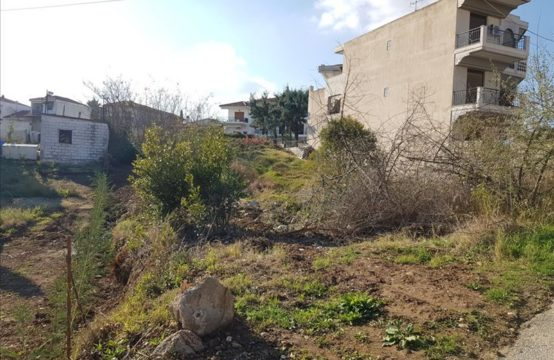 Land for Sale in Afytos, Kassandra – 780 sq.m.