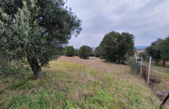 Land for For Sale in Posidi, Kassandra – 5500 sq.m.