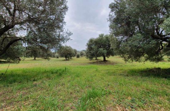 Land for For Sale in Posidi, Kassandra – 10000 sq.m.